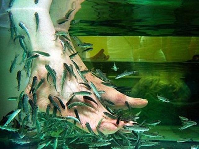 Massage Cá tại Hòa Phú Thành
