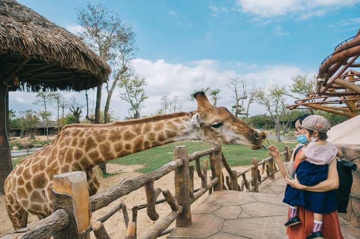 Khu công viên thú - River Safari